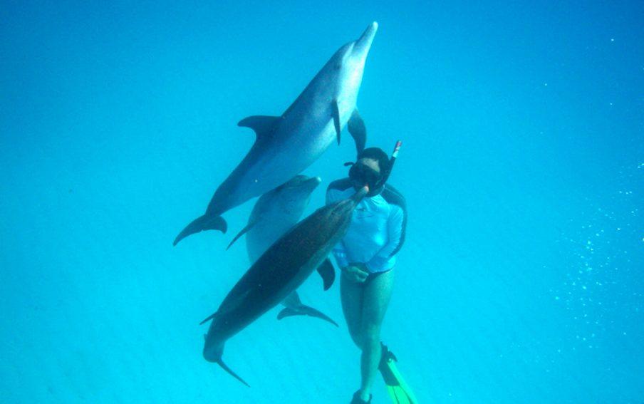 Freediving mit wilden Delfinen