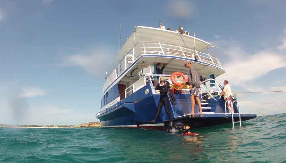 Freitauchen lernen @ Free-Diving.de